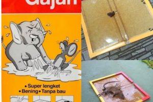 lem perangkat tikus cap gajah